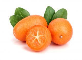 imagen Kumquat
