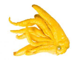 Buddha`s Hand