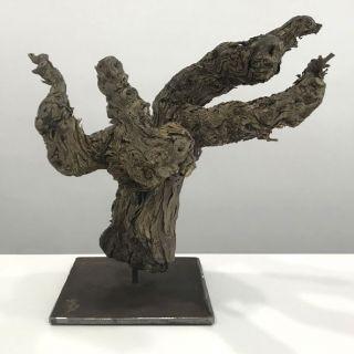 Escultura cepa de moscatel
