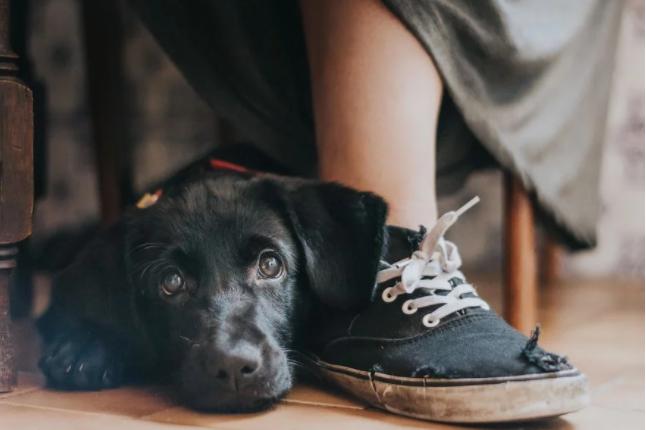 Mi perro tiene un soplo cardíaco ¿debo preocuparme?