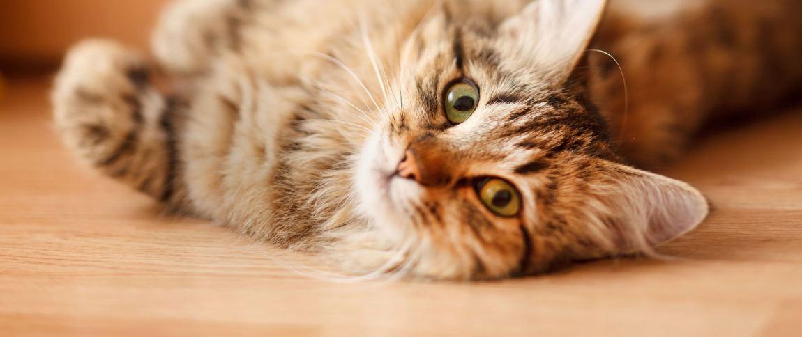Picture Consejos gatunos para la visita al veterinario