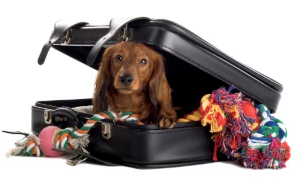 Foto Consejos para viajar con tu mascota